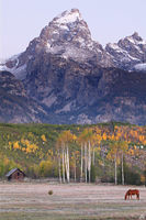 Wyoming, aspen, Grand Tetons, Grand Teton National Park, horse, cabin, autumn