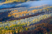 Colorado, aspen, autumn, fog, tree, Owl Creek Pass, Uncompahgre National Forest