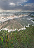 California, sea, grass, ocean, tide, clouds