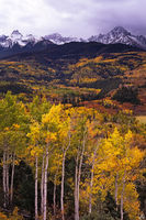 autumn, aspen, Sneffels Range, San Juan Mountains, Colorado