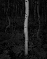 aspen, fern, autumn, black and white, bw, Colorado