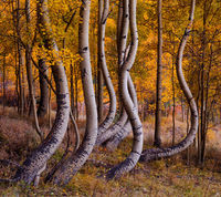colorado, aspen, fall, autumn, autumn