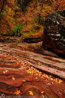 Utah, Zion, fall, autumn