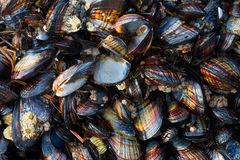 San Diego, tide, color, ocean, sea, beach, shell