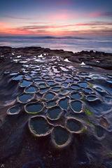 California, La Jolla, San Diego, coast, mitosis