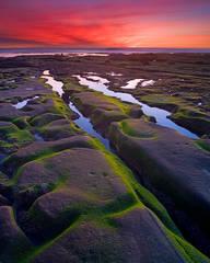 California, La Jolla, San Diego, coast, sunset, low tide, moss