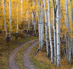Colorado, aspen, autumn, forest, Last Dollar, Uncompahgre National Forest, road, San Juan Mountains