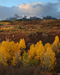 Colorado, aspen, Dallas Divide, Sneffles Range, autumn, scrub oak, San Juan Mountains
