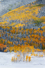 Colorado, Autumn, aspen, snow, trees, San Juan, mountains