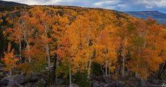 aspen, colorado, autumn, mountains, west, trees, forest, mesa