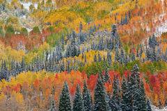 aspen, fall, autumn, Colorado