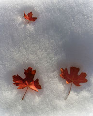 Utah, autumn, snow, leaves