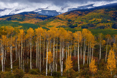 aspen, fall, autumn, Colorado, beckwith, mountains, kebler, sunset, trees