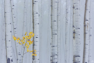 Colorado, 