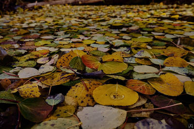 Colorado, fall, autumn, aspen, leaves, leaf, pond