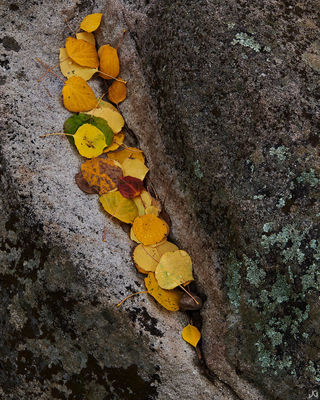 Colorado, aspen, lichen, autumn, rock