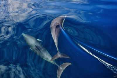 California, coast, dolphins, clouds