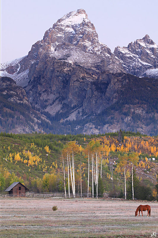 Wyoming, aspen, Grand Tetons, Grand Teton National Park, horse, cabin, autumn, photo