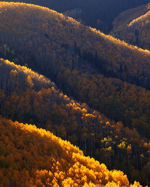Colorado, aspen, autumn, Maroon Bells, Snowmass, gold, photo