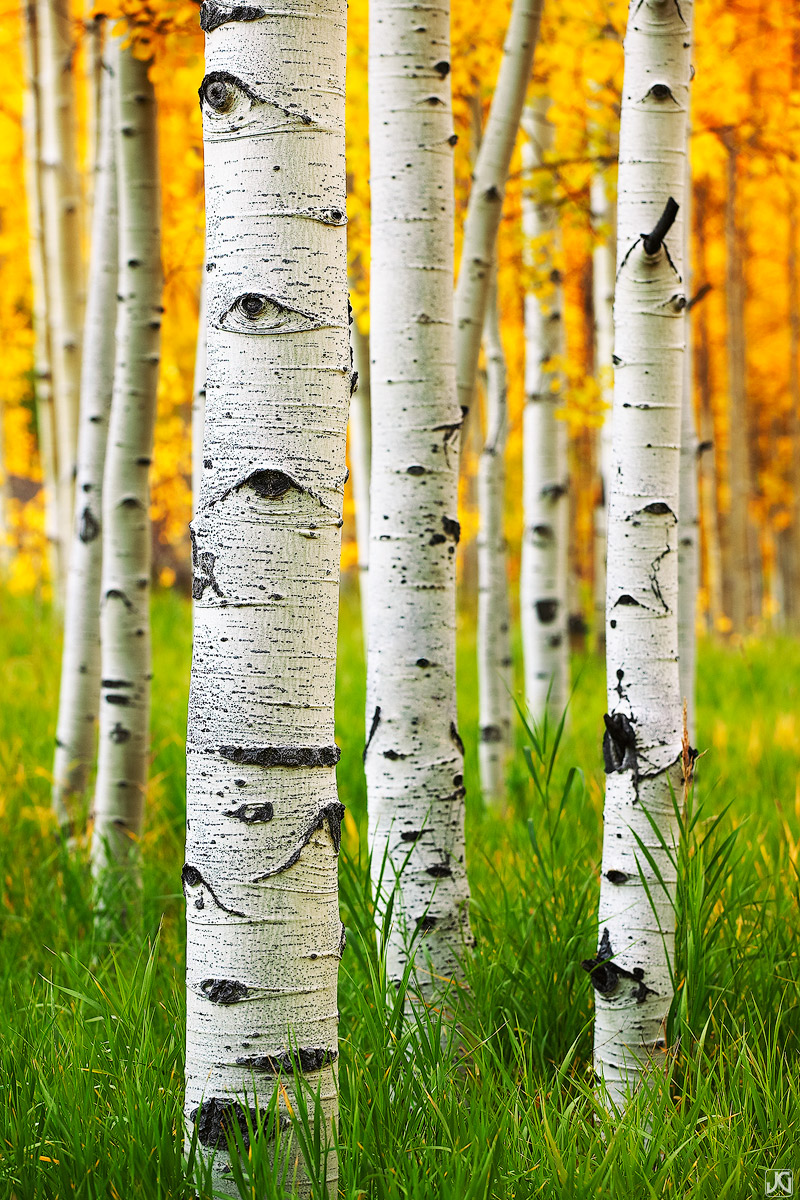 Colorado, aspen, autumn, sunset, forest, Maroon Bells, Snowmass, photo