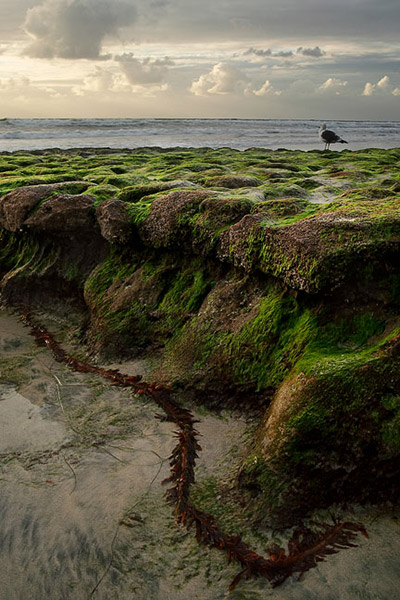 low tide, green, gull, clouds, sunset, beach, rock, Encinitas, Swamis, photo