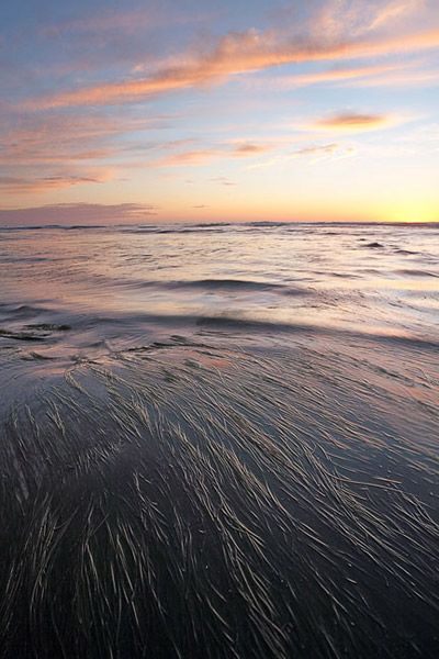 sea, grass, sunset, clouds, low tide, California, ocean, photo