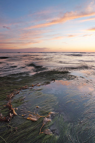 sea, grass, sunset, clouds, low tide, California, ocean, kelp, reflection, photo