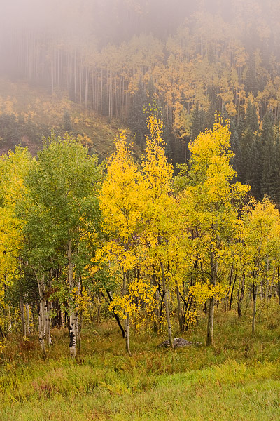 aspen, colorado, autumn, fall, fog, foggy, morning, photo