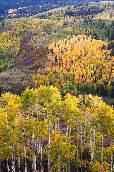 A colorful palette of autumn aspens in the shadows of the Sneffels Range, San Juan Mountains, Colorado.