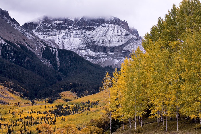 Colorado, aspen, forest, Sneffels, San Juan Mountains, autumn, photo