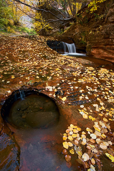 autumn, Zion, fall, leaves, color, waterfall, stream, creek, Utah, photo