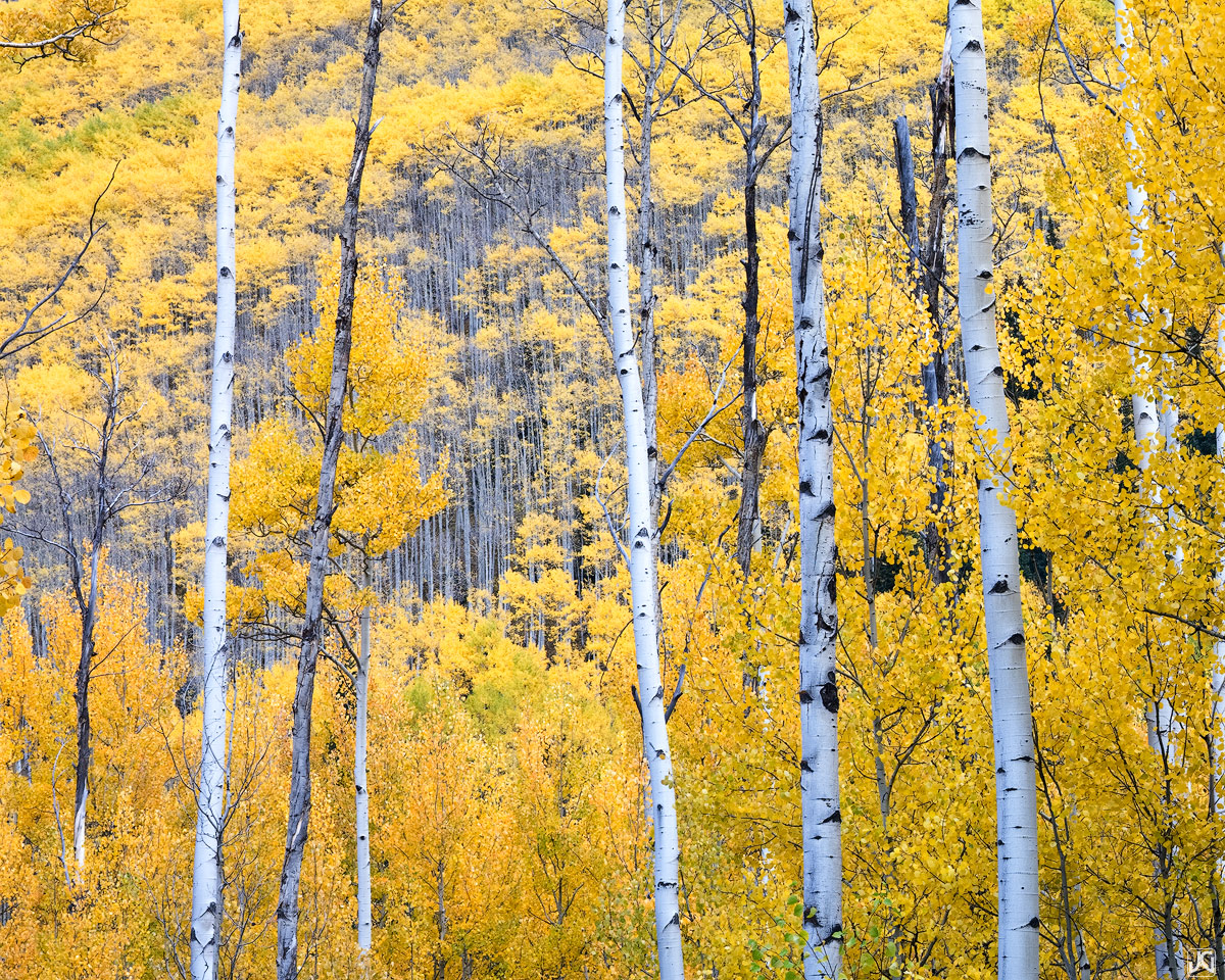 Colorado, aspen, forest, autumn, Castle Creek, White River, yellow, gold, landscape, photo