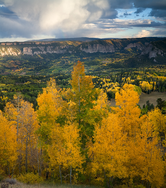 Colorado, aspen, tree, autumn, fall, evergreen, Cimarron, storm, rainbow, rain, clouds, sunset, vall, photo