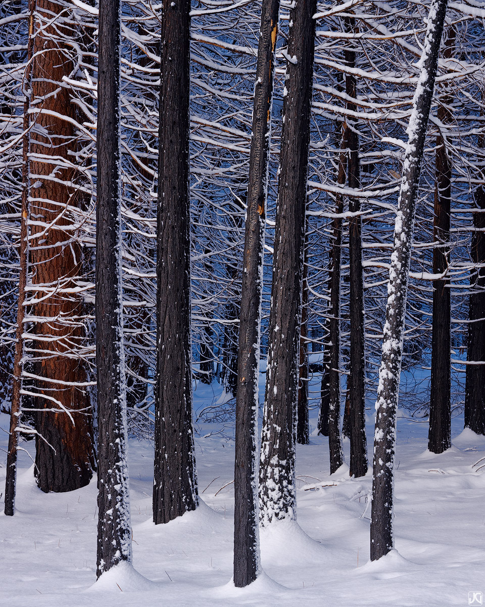 California, Yosemite, winter, trees, photo