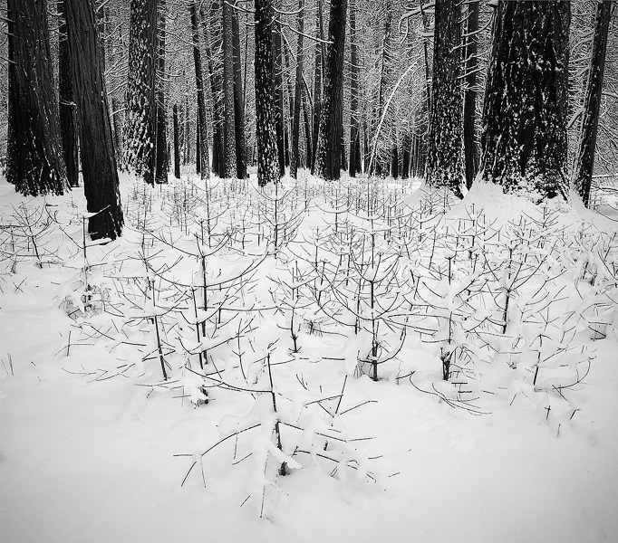 forest, snow, winter, California, mountain, Yosemite, photo