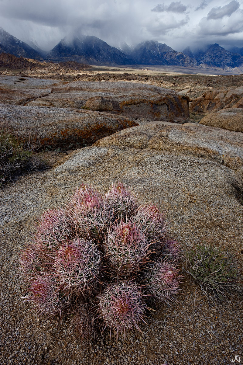 California, desert, cactus, barrel cactus, Eastern Sierras, Sierras, Sierra Nevada Mountains, rain shadow, photo