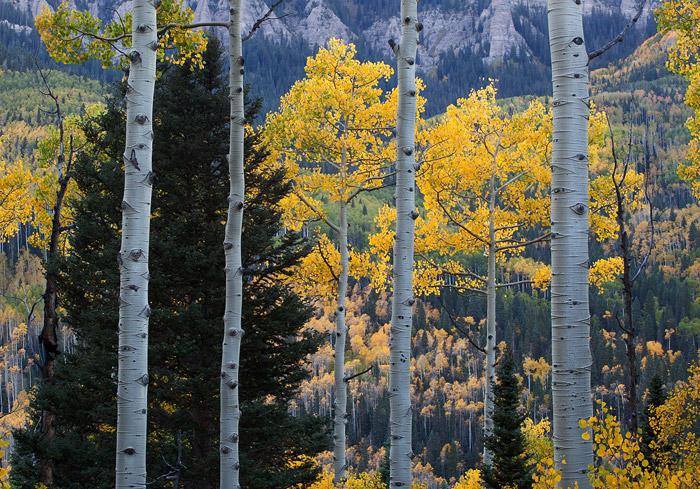 Colorado, fall, autumn, aspen, photo