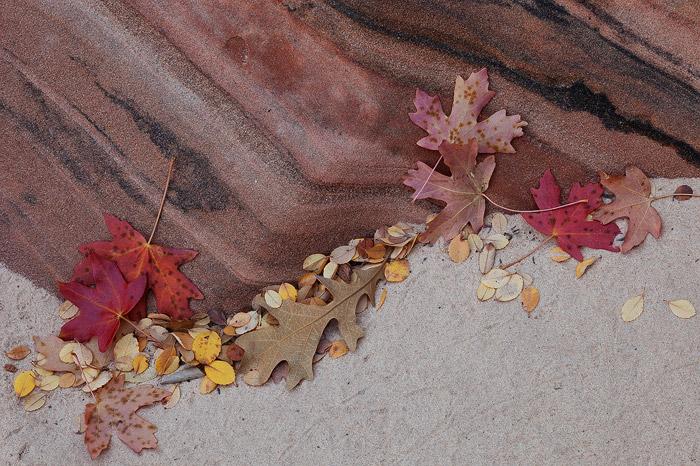 Utah, Zion National Park, maple, autumn, sandstone, photo