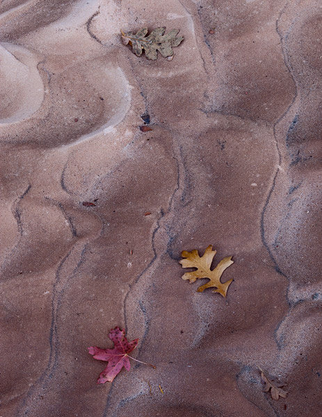 Zion, Utah, leaf, fall, autumn, sand, photo