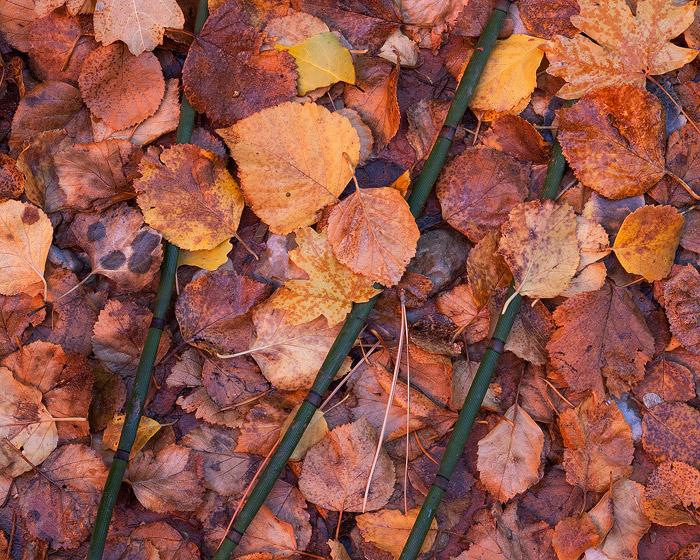 Utah, Zion, fall, autumn, leaf, photo