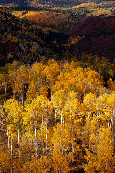 Golden aspen and scrub oak hide in and out of the shadows in the foothills of the Sneffels Range.