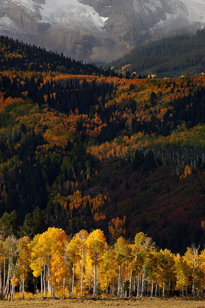 These brilliant autumn aspen stand out in the early morning light, while the hillsides of the Sneffels Range hide in the shadows...