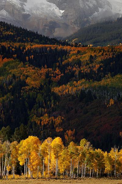 Colorado, aspen, Sneffels Range, autumn, shadows, San Juan Mountains, photo