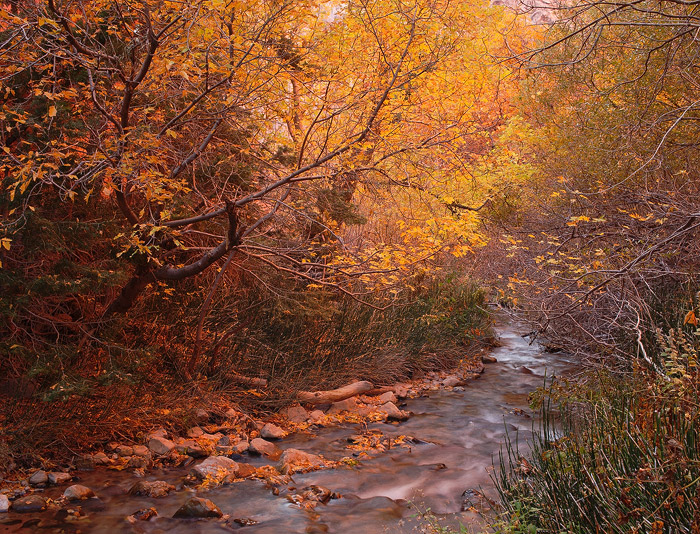 Utah, Zion National Park, autumn, stream, photo