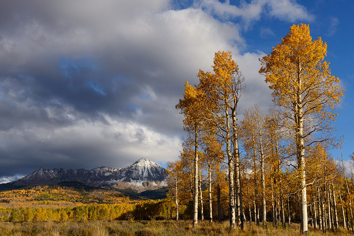 Colorado, aspen, Dolores Peak, Middle Peak, autumn, tree, fall, photo