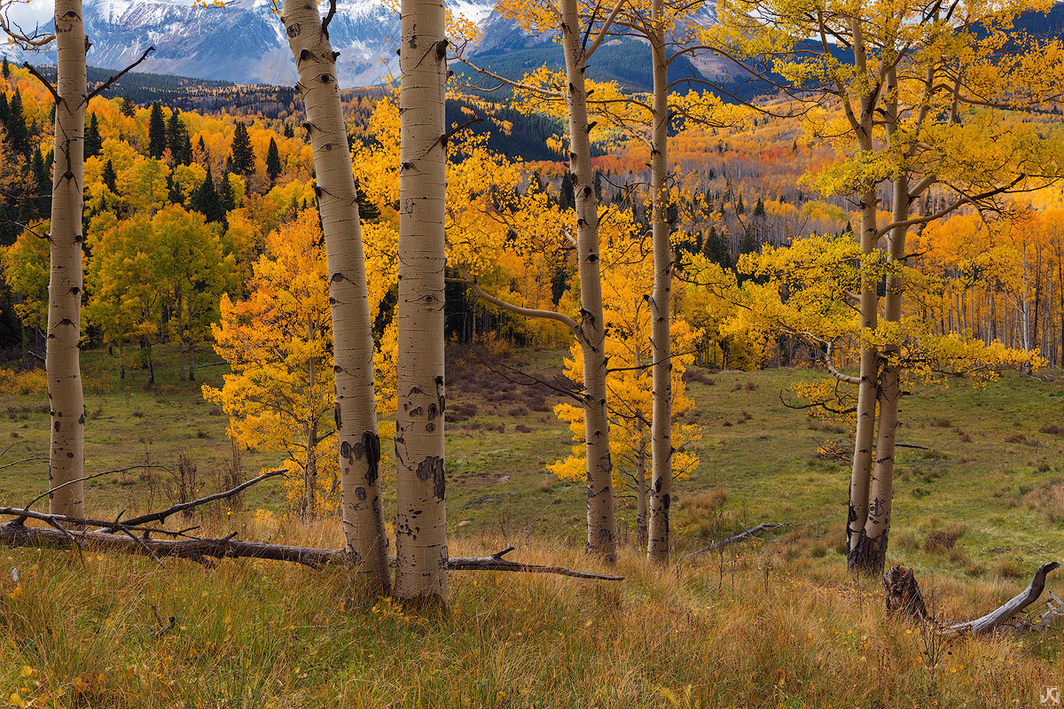 Colorado, aspen, autumn, Wilson Peak, San Juan Mountains, meadow, afternoon, Uncompahgre National Forest, forest, photo