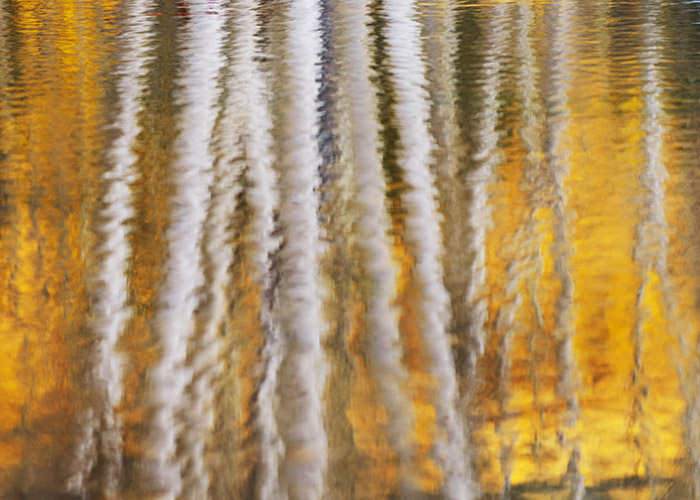 Colorado, aspen, autumn, tree, fall, reflection, photo