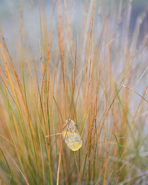 Colorado, aspen, autumn,leaves,grasses, photo