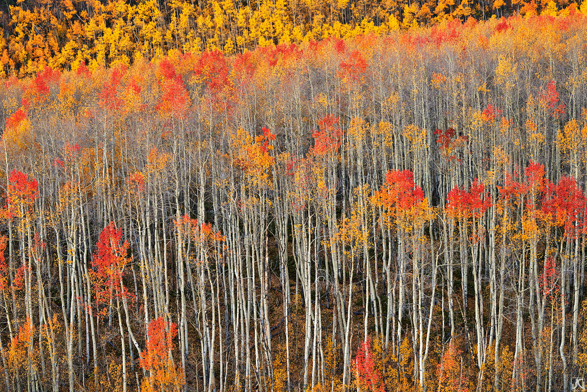 Sunrise lights up a quiet morning scene complete with aspen in their autumn glory.