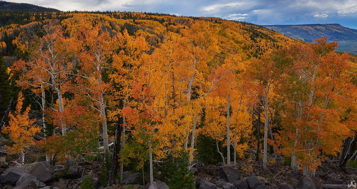 aspen, colorado, autumn, mountains, west, trees, forest, mesa, photo